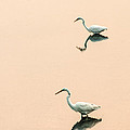 Don Johnson - Two Egrets