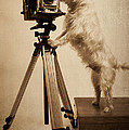 Edward Fielding - Vintage Pho Dog Grapher...