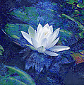 Ann Powell - Water Lily