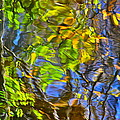 Robert Harmon - Watery Autumn Reflection