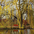 Isabel Poulin - Weeping willow