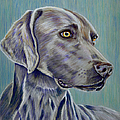 Michelle Wrighton - Weimaraner Grey Ghost