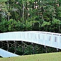Cynthia Guinn - White Bridge