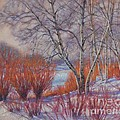 Fiona Craig - Winter Birches and Red...