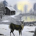 Sheri Keith - Winter Doe