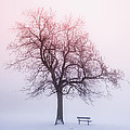 Winter Tree In Fog At Sunrise by Elena Elisseeva