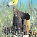 Frank Cochran - Yellow Finch