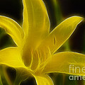 Gary Gingrich Galleries - Yellow Lily 6015