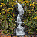 Stephen  Vecchiotti - Forest Waterfall In...