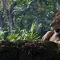 Zoe Ferrie - King of the Jungle