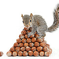 Squirrel And Nut Pyramid by Mark Taylor