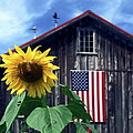 Sally Weigand - Sunflower by Barn