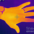 Thermogram Of A Hand by Ted Kinsman