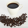 Coffee by Photo Researchers, Inc.