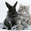 Kitten And Rabbit Getting Into Tinsel by Mark Taylor