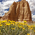 Mark Smith - Capitol Reef National...