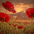 Debra and Dave Vanderlaan - A Poppy Kind of Morning