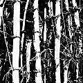 David Wenman - Bamboo