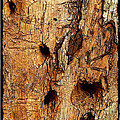 Judi Bagwell - Bark with Woodpecker...