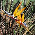 Sharon  Gonzalez - Bird of Paradise