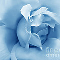 Jennie Marie Schell - Blue Pastel Rose Flower