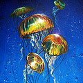 Marco Antonio Aguilar - Bubbles and Jellies