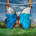 Mike Savad - Butterfly - Morpho - I...