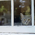 Lisa  Phillips - Cat in the Window