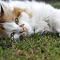 Raffaella Lunelli - Cat on the grass