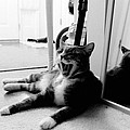 Katherine Howard - Cat Yawn true BW