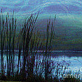 Judi Bagwell - Cattails in Mist