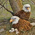 Decorah Eagle Family
