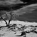 Ralf Kaiser - desert tree in White...