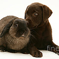 Dog Pup With Rabbit by Jane Burton