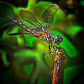 Dave Sandt - Enhanced Dragonfly