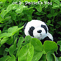 Ausra Paulauskaite - Even Pandas are Irish on...