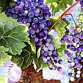 Karen Casciani - Grape Vines