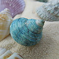 Chad and Stacey Hall - Green-blue Shell in the...