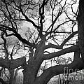 Phantasmagoria Photography - Haunted Tree
