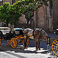 Mary Machare - Horse and Carriage