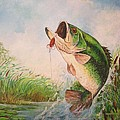 Jose Lugo - Largemouth bass