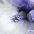 Jennie Marie Schell - Macro Purple and White...