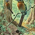Mexican Motmots Are Perched On Jungle by Walter A. Weber