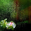 Shirley Sirois - Orchids in the Rain