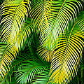 Karon Melillo DeVega - Palm Leaves in Green and...