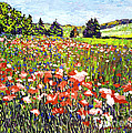 David Lloyd Glover - Poppy Fields in France