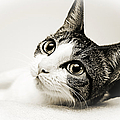 Andee Photography - Precious Kitty