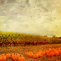 Kathy Jennings - Pumpkins In The Corn...