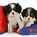 Puppies With Rain Boats by Jane Burton