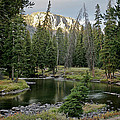 Kenneth McElroy - Slough Creek Campspot